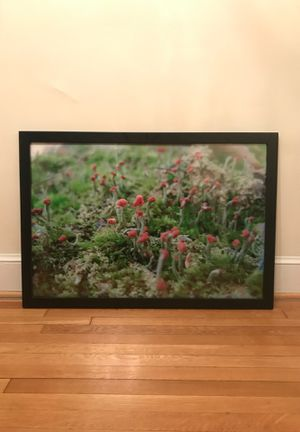 Nature photo in black frame for Sale in Washington, DC