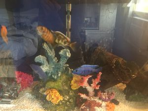 29 Gallon aquarium, 2 filters, heater, bubbler, decor.... for Sale in Covington, KY