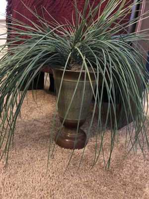 Decorative plants for Sale in Georgetown, KY