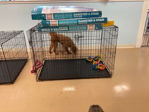 Large dog cage for Sale in Plain City, OH