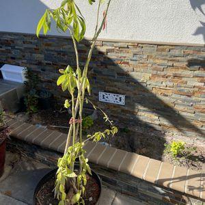 Plant for Sale in Norwalk, CA