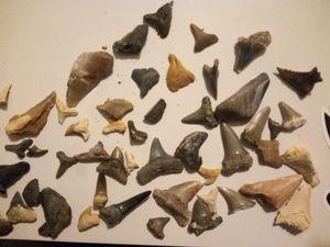 Shark Teeth for Sale in Rancho Santa Margarita, CA