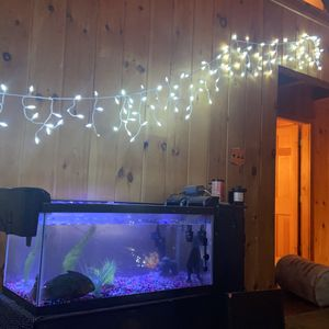 Fish Tank for Sale in Coatesville, PA
