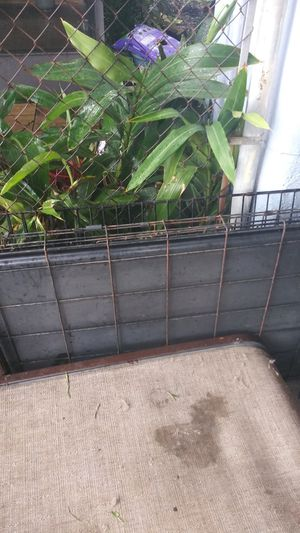2 door 42 inch dog crate $15 for Sale in Tampa, FL