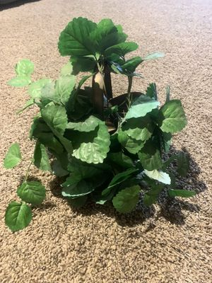 Fake plant for Sale in Erie, PA