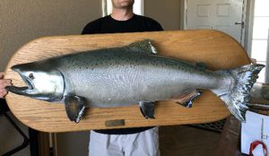King Salmon Skin Mount for Sale in Chino Hills, CA