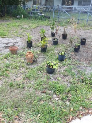 Tropical plant sale for Sale in Jupiter, FL