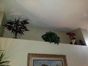 plants for Sale in Phoenix, AZ