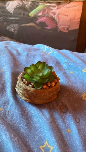 Succulent with rocks for Sale in Norwood, PA