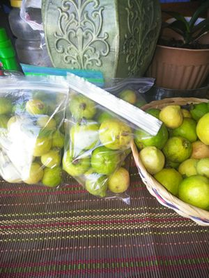20- sweet guavas for $2.50 for Sale in Ontario, CA