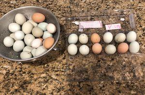 Fresh eggs 🥚 for Sale in Payson, AZ