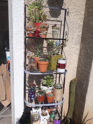 Suculents diferent size. Different price. for Sale in Reedley, CA