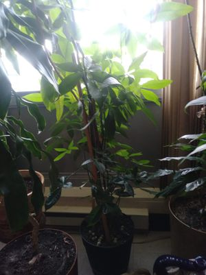 Big beautiful plants for Sale in Yonkers, NY