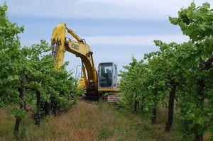 Vineyard Removal for Sale in Bakersfield, CA