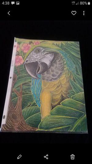 Hand drawn parrot for Sale in Cincinnati, OH