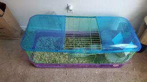 Guinea pig for Sale in Albuquerque, NM
