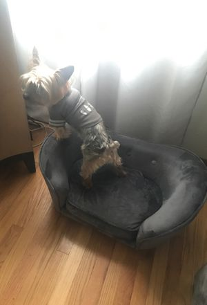 Dog couch for Sale in Chicago, IL