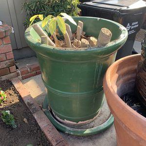Plant pot for Sale in Pico Rivera, CA
