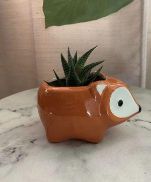 Succulent for Sale in Fresno, CA