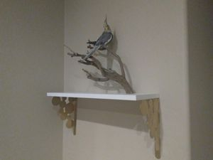 Custom bird perches for Sale in Phoenix, AZ