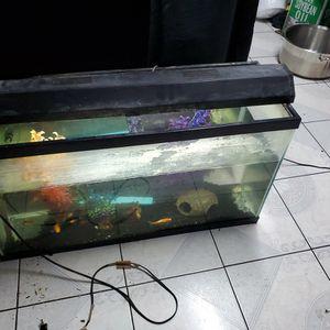 40 Gal Fish Tank for Sale in Norwalk, CA