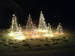 Beautiful outdoor Christmas trees for Sale in Erie, PA