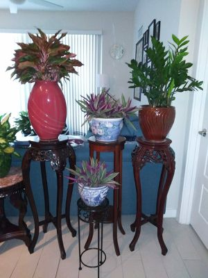 Selection of Plants in Pots for Sale in Miami, FL