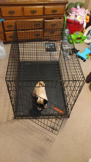 Large Dog Crate for Sale in Nicholasville, KY