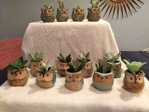 Cute owl planters with live succulents for Sale in Clearwater, FL