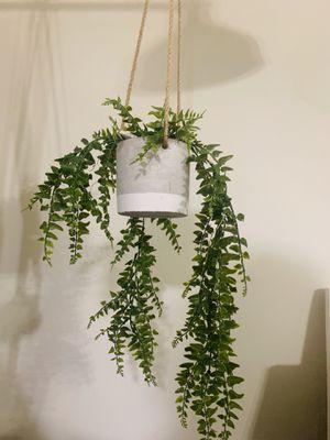 Hanging Plant for Sale in Arlington, VA