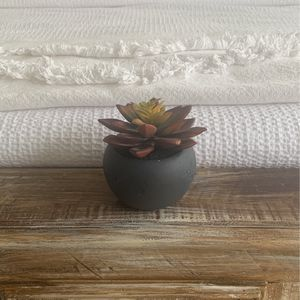 Feux Succulent for Sale in Washington, DC