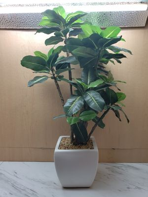 Fake Plant for Sale in Marysville, OH