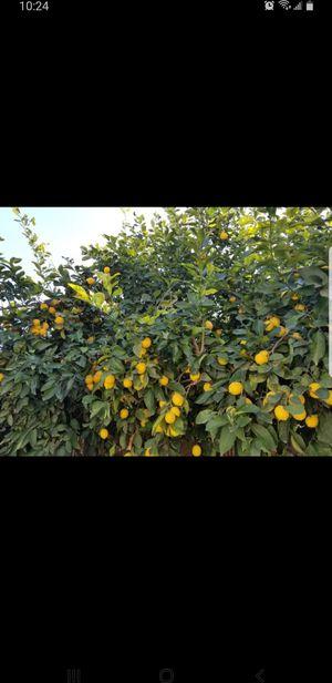 Organic lemons for Sale in Clovis, CA