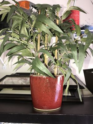 House plant for Sale in Temple Hills, MD