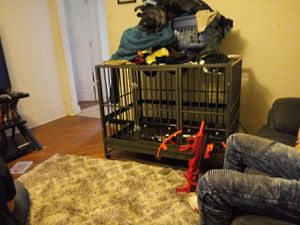Heavy-duty dog kennel for Sale in Muscatine, IA