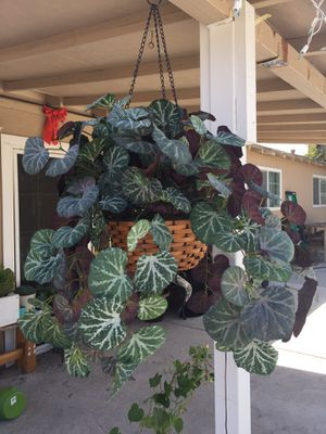 Beautiful fake plant for Sale in Modesto, CA