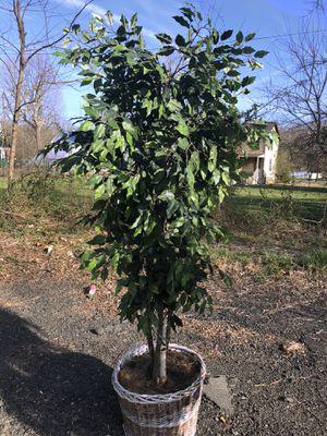 Plastic tree for Sale in Aldie, VA