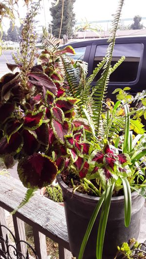 Beautiful plants for Sale in Riverbank, CA