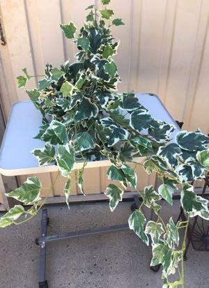 Fake plant for Sale in Fresno, CA