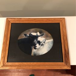 Framed Picture Of Goats for Sale in Swedesboro,  NJ