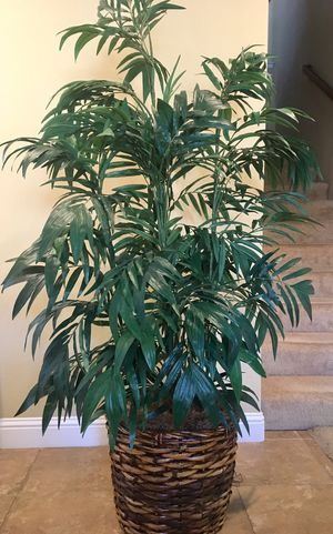 6ft High Quality Silk Plant in Wicker Pot for Sale in Modesto, CA