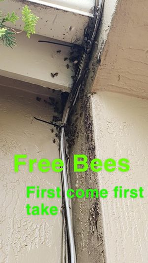 Free Bees for Sale in Miami, FL