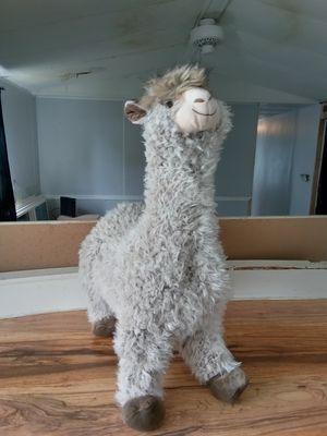 Llama for Sale in Orlando, FL