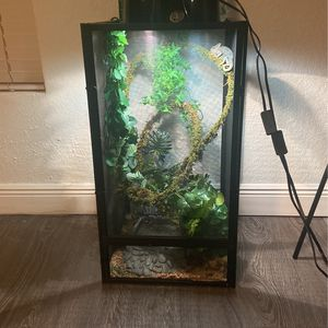 Veiled Chameleon and Cage for Sale in Tampa, FL