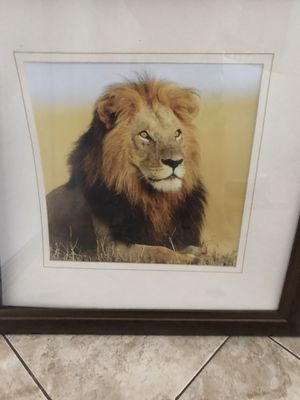 Lion for Sale in Jupiter, FL