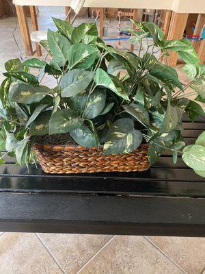Artificial plant for Sale in Murrieta, CA