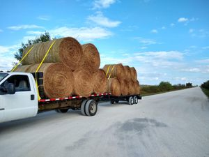 Freshly cut fertilized hay for Sale in Frostproof, FL