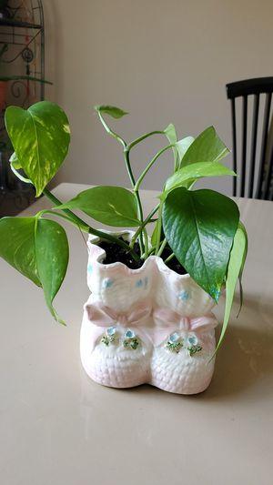 Cute Unique Plant Pot/ Vine Plant for Sale in Colorado Springs, CO