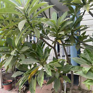 Plants for Sale in El Monte, CA