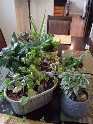 Plants for Sale in Niwot, CO